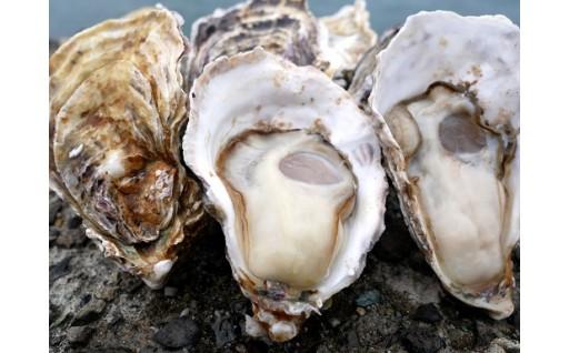プリップリでアツアツの牡蠣をご自宅で楽しめます!
