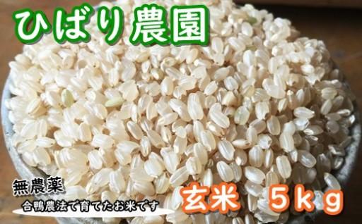 【無農薬・合鴨農法】ひばり農園の玄米5kgセット