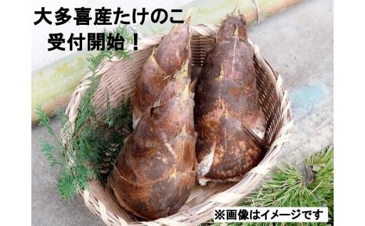 大多喜町産筍  今年も受付開始!