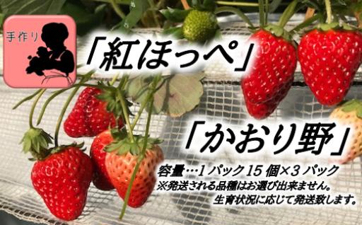 新鮮で甘い野田の朝摘みいちご!デラックス3パック