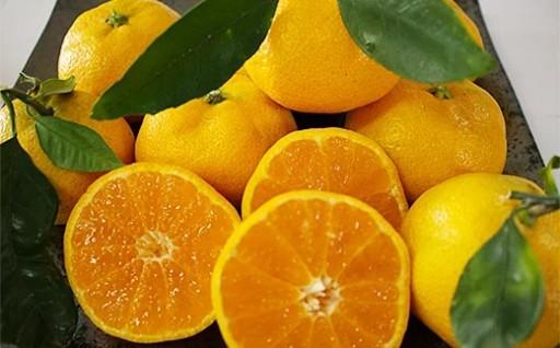 八代産フルーツ みかん 青島 約4kg