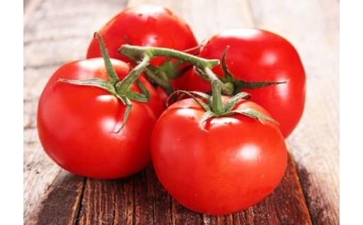 野瀬さんのもぎたて「桃太郎トマト」(ハウス栽培)
