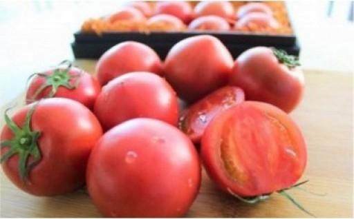 塩熟トマト Kitachi Rosso 600g