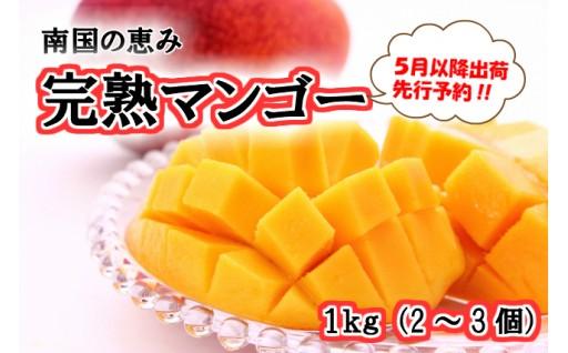 南国の恵み 完熟マンゴー1kg【先行予約】