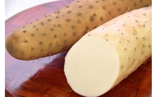 シャクッ!ねば~で箸が止まらない…聖籠産ねばり芋