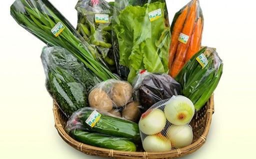 【モリンガファーム】季節の野菜セット10品