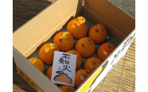毎年人気!吉野川市のこだわりデコポンです^^