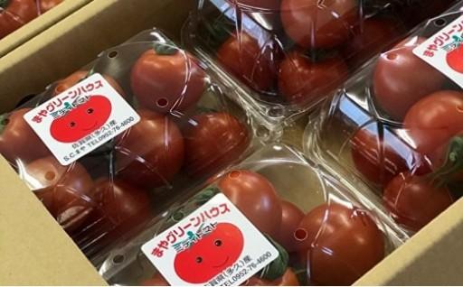 真っ赤なミディトマトの登場です!