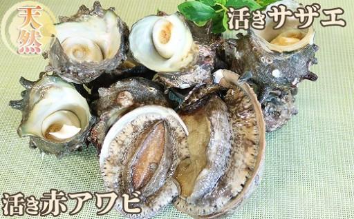 海の高級食材!アワビとサザエを活きたまま届け!