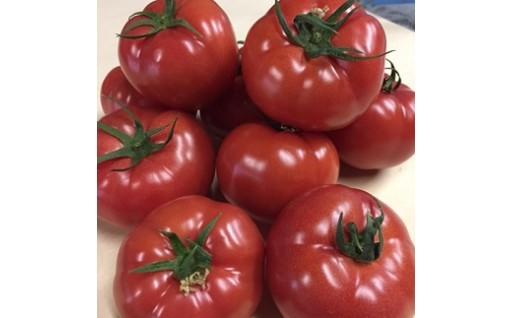 完熟とまとの新井園 桃太郎トマト(約2kg)