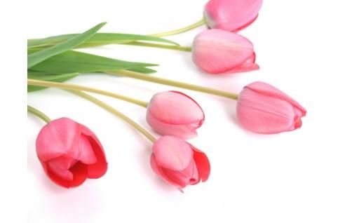 季節のお花定期便★3月はチューリップ20本の花束