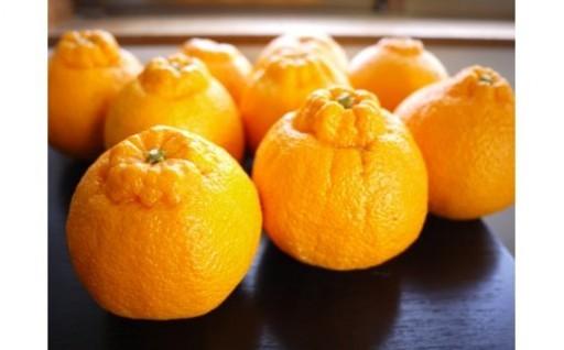 柑橘の本場、有田市の「デコポン」受付中!