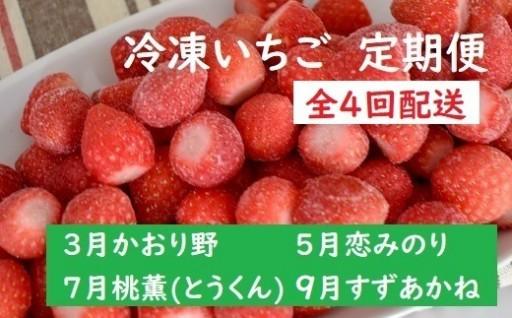 「冷凍いちご」のお楽しみ定期便(隔月)が登場!!