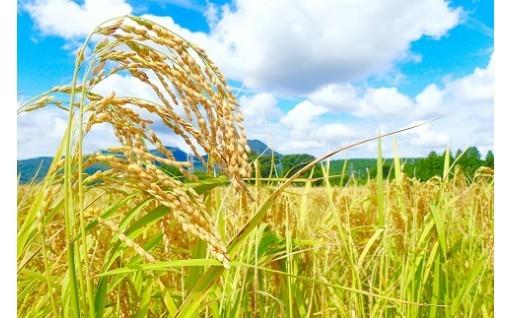 毎月お届け!茨城県産お米食べくらべ合計60kg