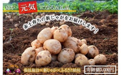 【寄附5千円】徳之島の新じゃがいも5kgをお届け