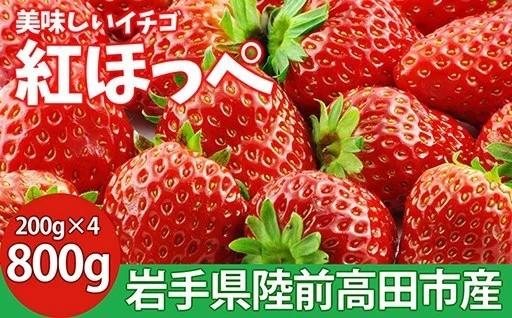 美味しいイチゴ紅ほっぺ