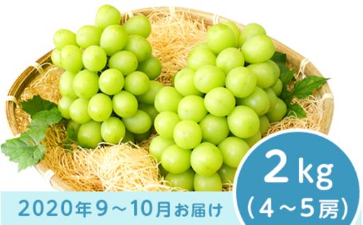 【おすすめのお礼の品】シャインマスカット2kg