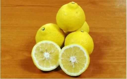 すっぱそうな見た目に反して甘い柑橘「はるか」