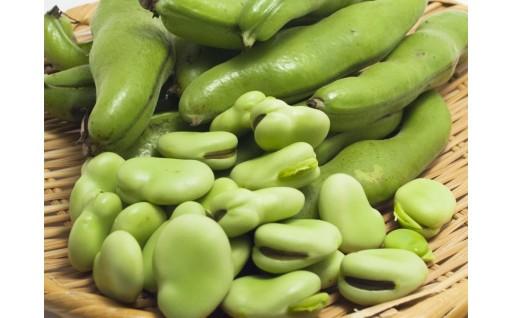 【先行受付】収穫日に農家から直送そら豆