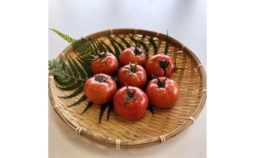【味自慢の土耕栽培】海部清流トマト28玉セット