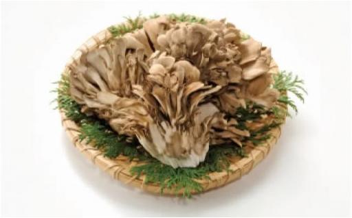 森の精 乾燥舞茸 40g 自然からの贈り物