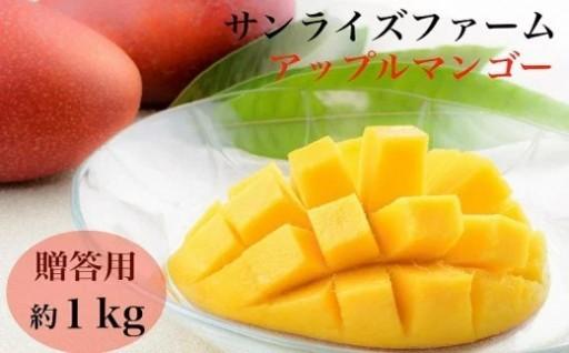 サンライズファームのアップルマンゴー約1kg