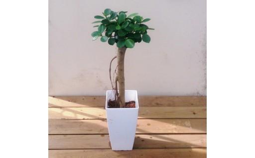 可愛い観葉植物でお部屋に癒しを♪