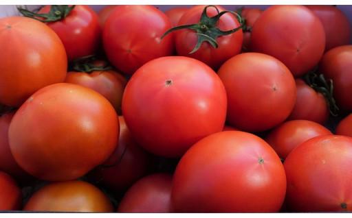 奈須農園こだわりの美味しいトマト1.5kg