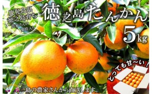 【旬です。】徳之島産たんかん5kg 寄附額1万円