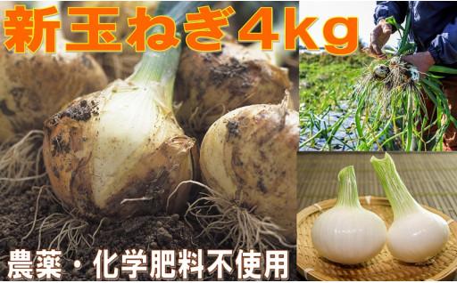 甘~い新玉ねぎ4kg!農薬・化学肥料不使用