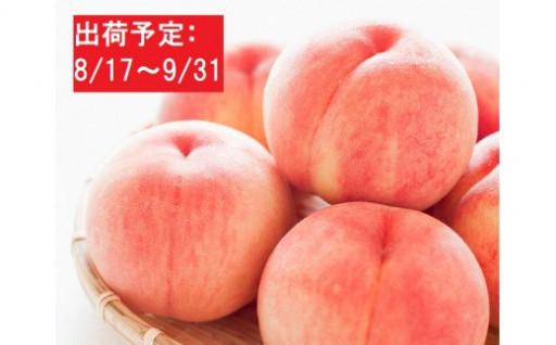 大江町産「白桃」約5kg(秀以上18~24玉)