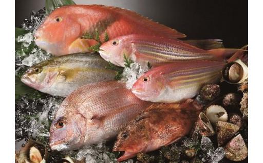 【平戸地魚詰合せ】朝獲れ鮮魚をご自宅へお届け!