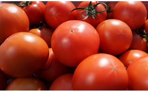 日向市より美味しいトマトをお届けします