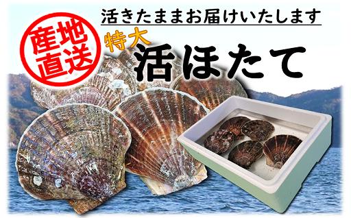 ♦岩手三陸産 活ホタテ (特大5枚入)