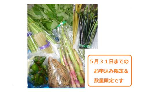 【5月31日までのお申込み限定】旬の山菜セット