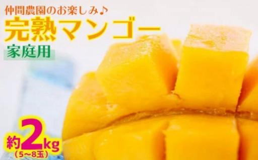 仲間農園の完熟マンゴー約2kg(5~8玉)家庭用