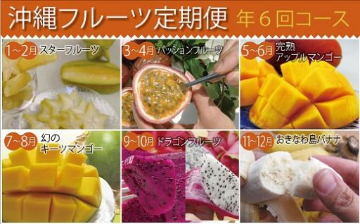 沖縄県産の南国フルーツたちをドドーーン!とお届け