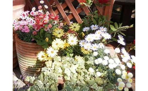 お部屋に潟上市のお花を飾りませんか?