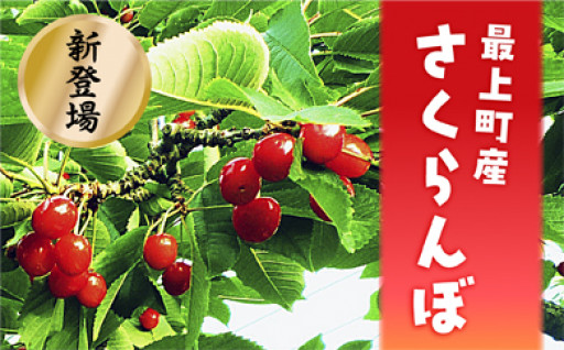 【JA】最上町産さくらんぼ佐藤錦 Lバラ1kg