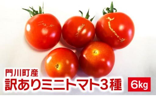 門川町産訳ありミニトマト3種 6kg