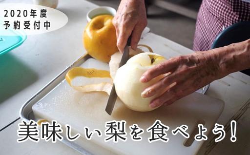 【2020年度予約受付中】伊奈町の美味しい梨