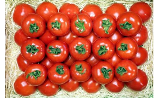 ご好評につき、フルーツトマト順次発送分の受付延長