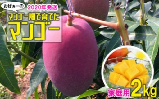【2020年発送】おばぁーのマンゴー 2kg