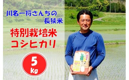 ごはんだけでもおかわりしたくなる情熱の特別栽培米
