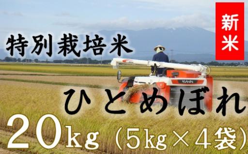 特別栽培米ひとめぼれ20kg(5kg×4袋)