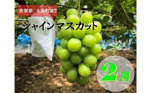 佐賀県太良町産「シャインマスカット」が新登場!