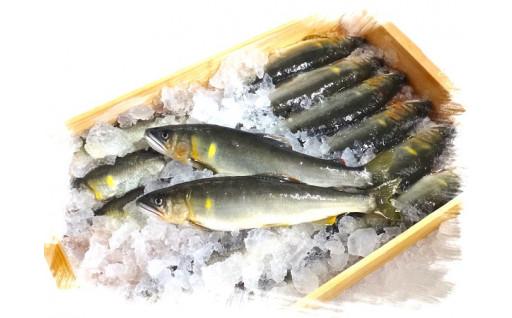 夏、秋、冬の川漁師からの定期便です!