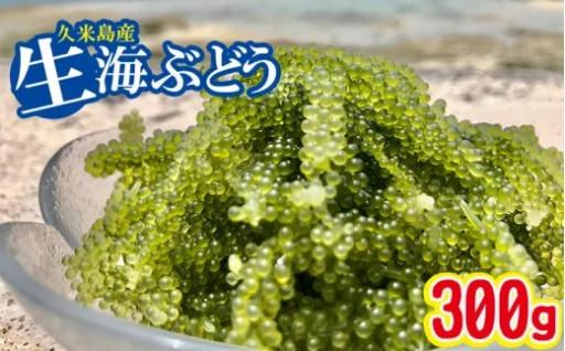 """久米島産 球美の""""生""""海ぶどう(100g×3個)"""