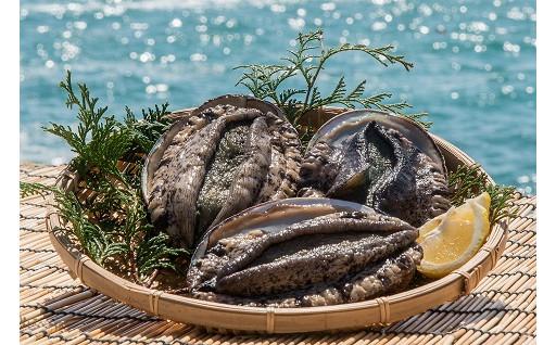 【壱岐の活きな海の幸】クロアワビ