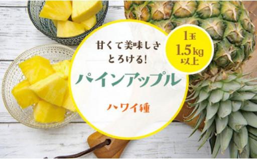 パインアップル1玉(ハワイ種)